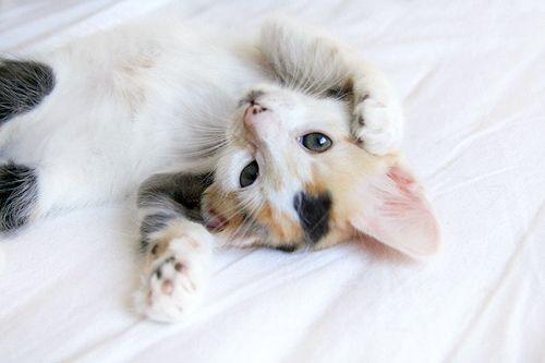 miauuu