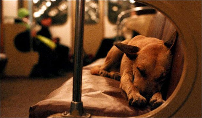 These Wild Dogs Commute On The Train Each Day Their Clever