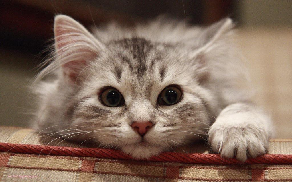 #KittyLoafMonday