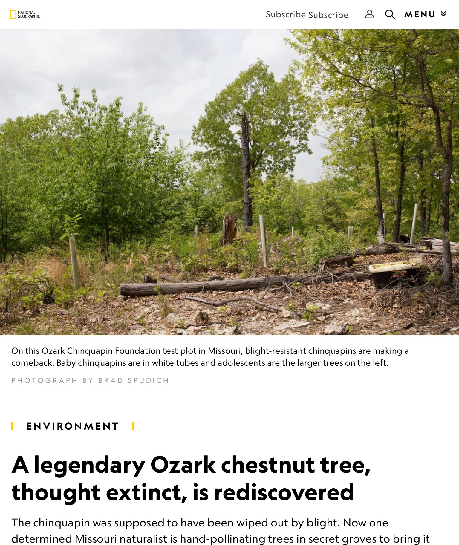 A Legendary Ozark Chestnut Tree Thought Extinct Is Rediscovered
