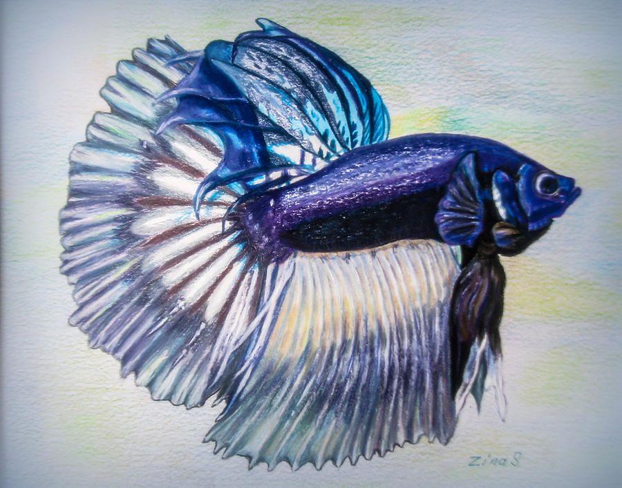 betta fish drawing - Google Search   ♥ Betta Fish ...  Betta