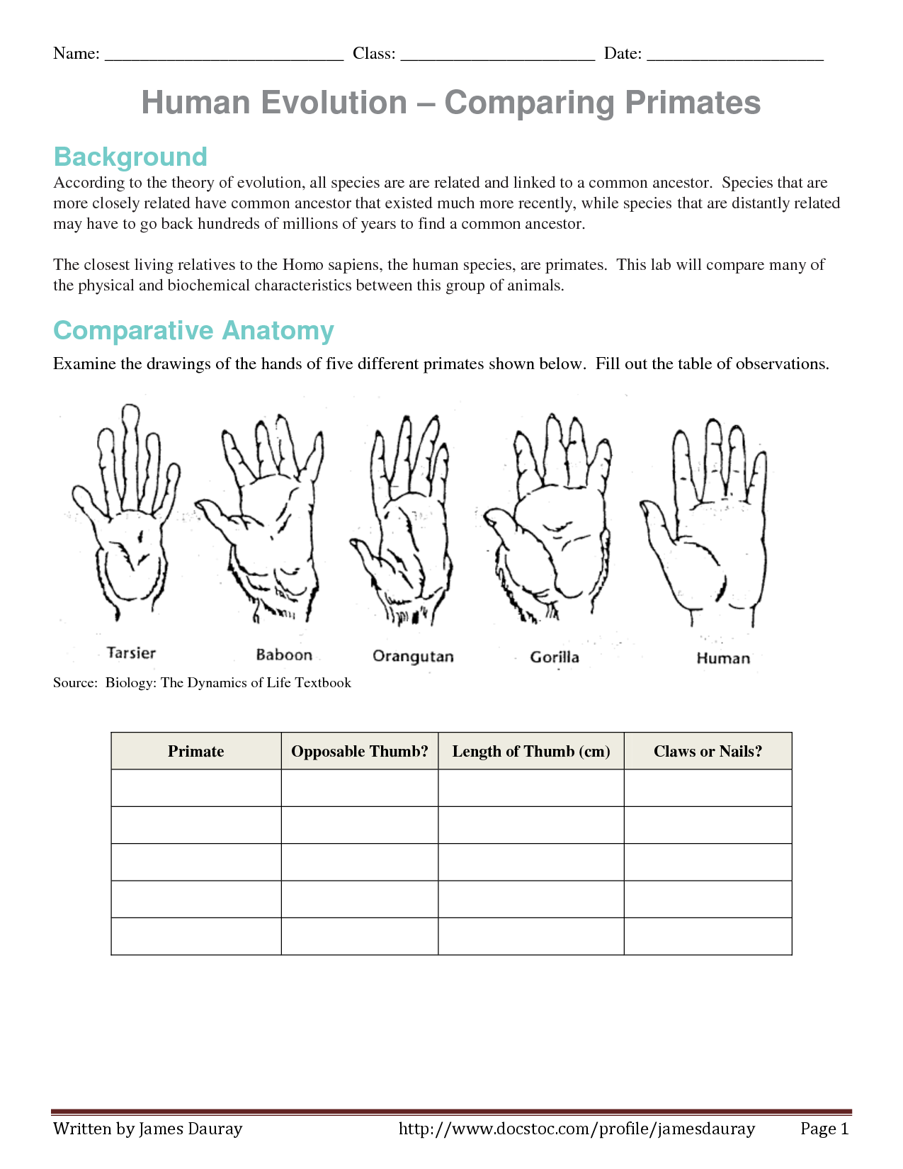 Worksheets Evolution Worksheet evolution of human thumb evidence worksheet comparing primates by