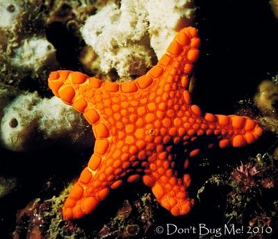 Puget Sound King Crab King Crab Puget Sound Puget