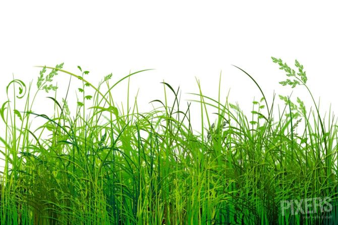 Grass The Next Big Thing In The Office Interior Design Pixersize Com Office Interior Design Office Interiors Grass