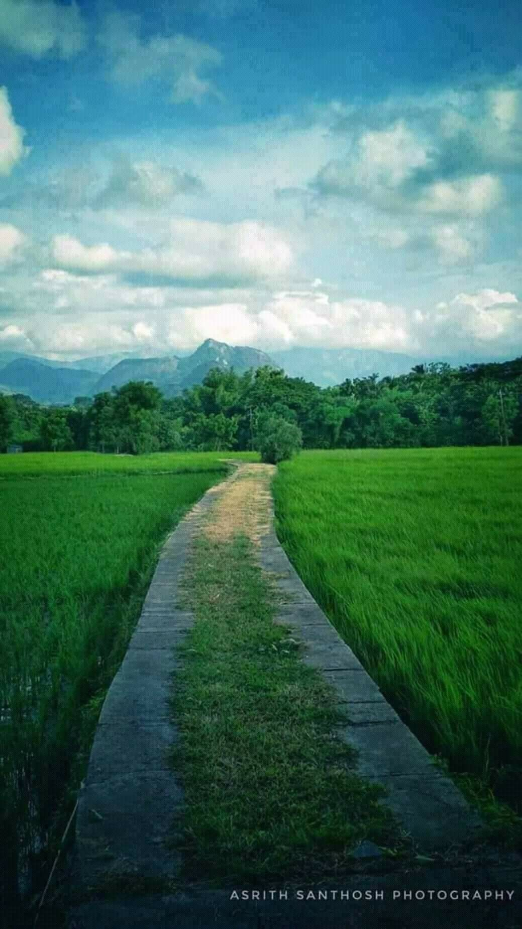 Kerala Paddy Fields Picsart Background Background Images Village Photography