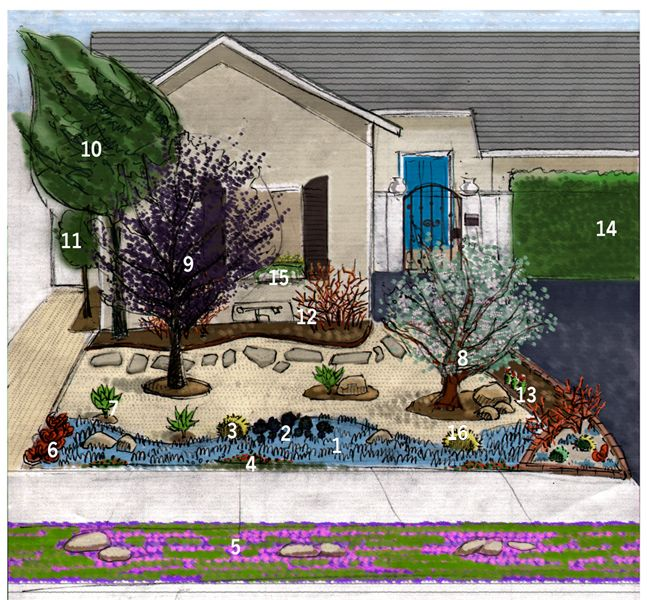 Xeriscape Ninjas: Blog About Xeriscaping Their Front Yard