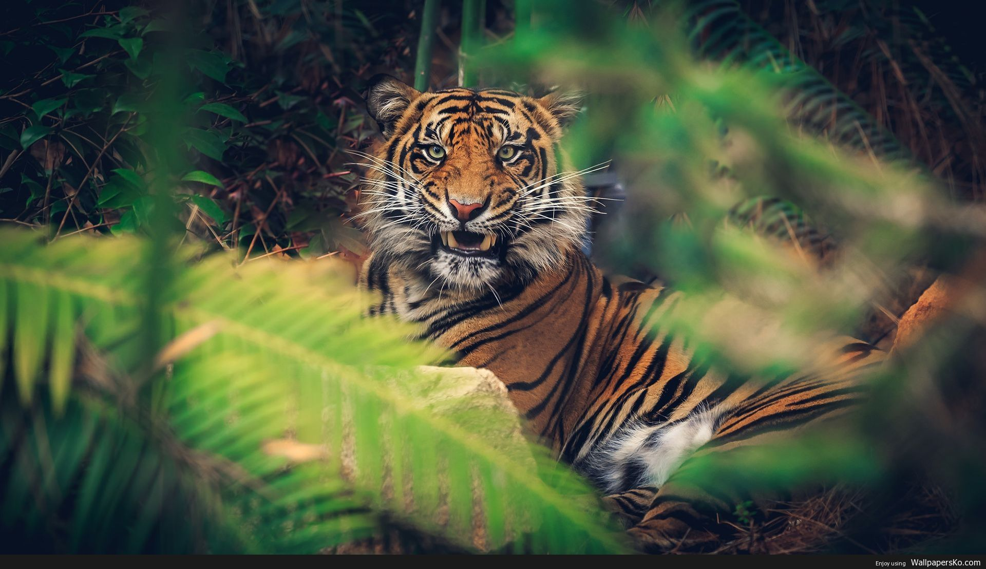 4k Animal Wallpaper Http Wallpapersko Com 4k Animal Wallpaper Html Hd Wallpapers Download Wild Animal Wallpaper Animal Wallpaper Pet Tiger