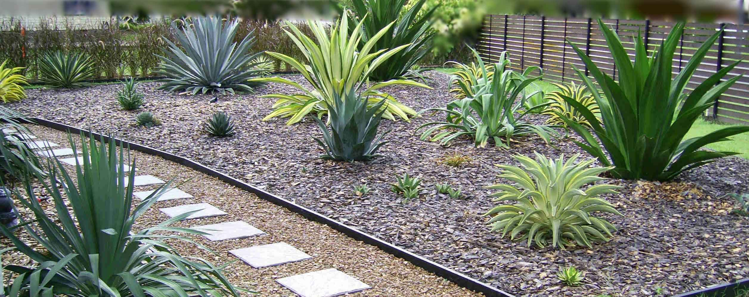 yucca agave plants landscaping garden design ideas