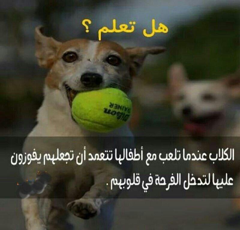 وفاء الكلاب اعظم من بعض البشر Corgi Animals Dogs