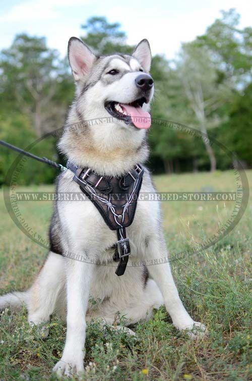 Comfortable Adjustable Painted Harness For Siberian Husky