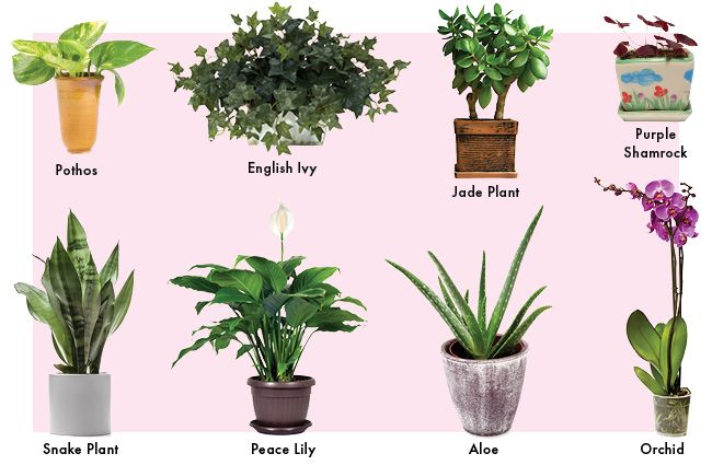 Top 8 Low Maintenance House Plants For Beginners My Fresh Perspective Low Maintenance Indoor Plants Hanging Plants House Plants
