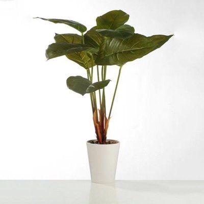 Mooie kunstplanten,  Scindapsus,  Deze plant is 60 cm hoog, en wordt in een witte pot geleverd.  De prijs is slechts € 17,99  Deze mooie planten kunnen worden besteld in onze webwinkel www.rodebeagle.nl