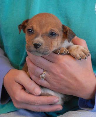 Pawliday Cards Animal Rescue Spca Animals