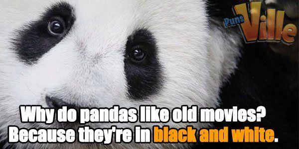 Panda Puns Panda Puns Panda Funny Puns