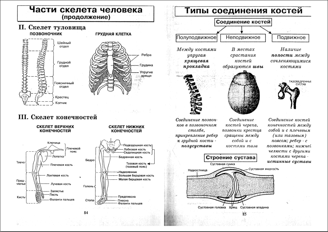 Иллюстрация 1 из 18 для анатомия человека в таблицах и схемах.