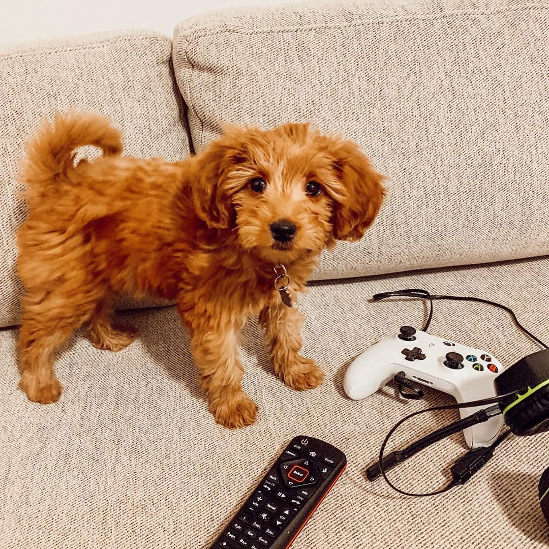 Playing Video Games With Dad Cute Cats And Dogs Puppy Care