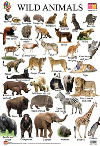 10 Wild Animals Name In English Google Search Animals Wild Animals Name In English Animal Pictures For Kids