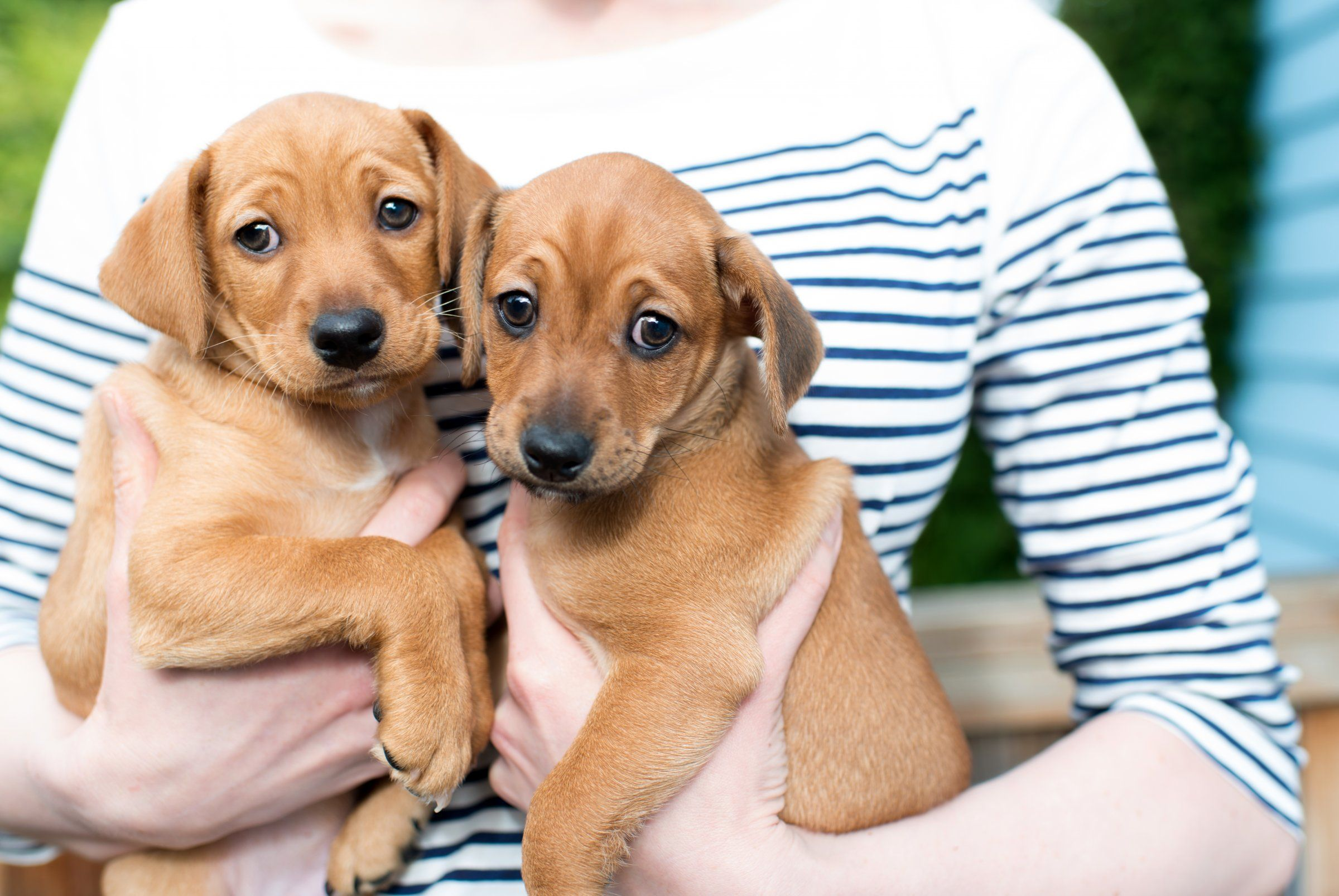 Heres why pet care is a true recessionproof industry
