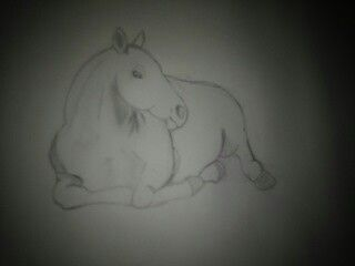 Work In Progress Horse Laying Down Drawing Horse Drawings My Drawings Drawings