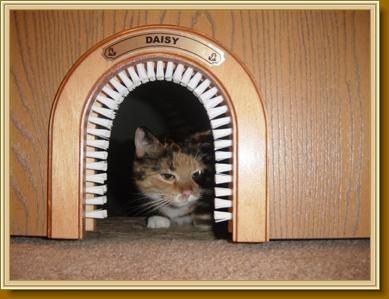 Cat Hole: Cat Door Frame With Grooming Brush. Would Be Nice For A Litter