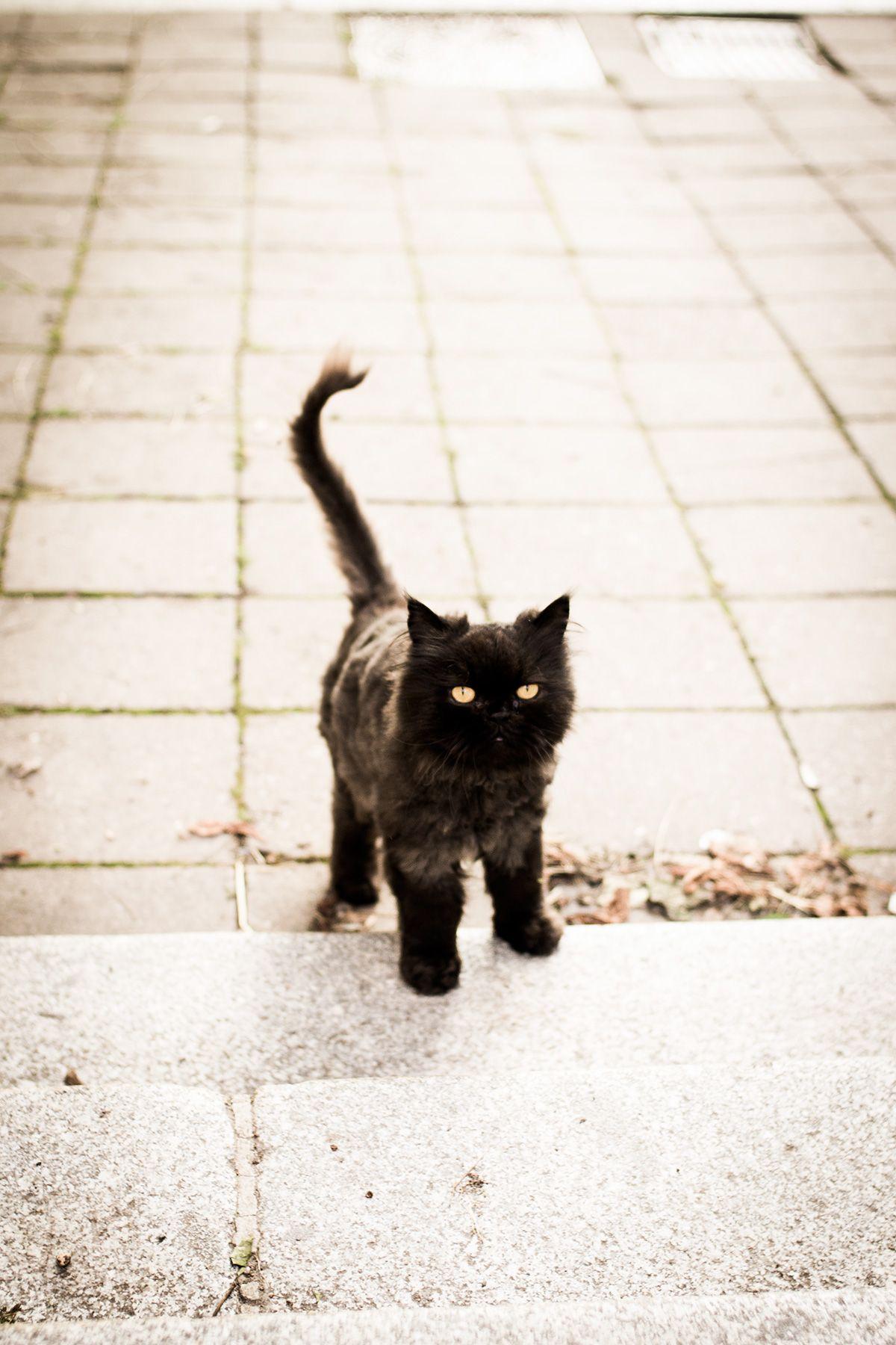 Cute Black Cat Crazy Cats Cute Black Cats Cats