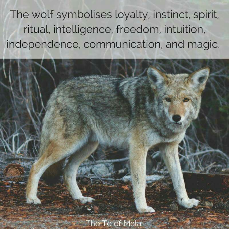 Wolf Symbolism Earth Witch Magick The Te Of Mala More