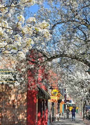 Spring Downtown Traverse 3 Michigan Travel Traverse City Traverse City Mi