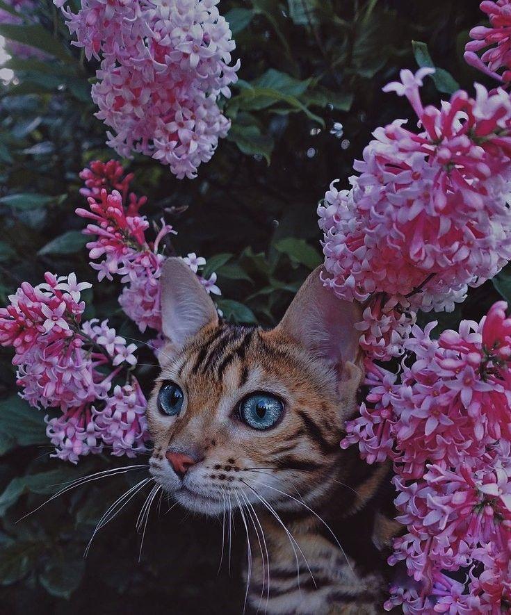 LitterSolutionsCat Want a New Cat Litter Plan? Cat