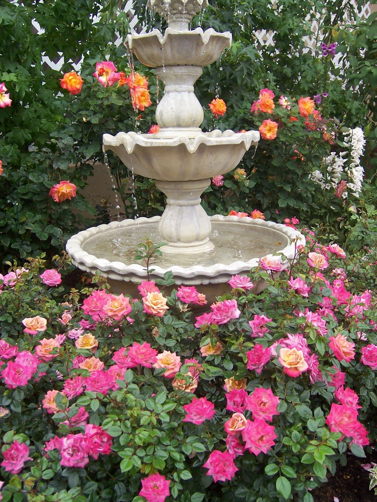 Lovely roses around a water fountain water fountains pinterest