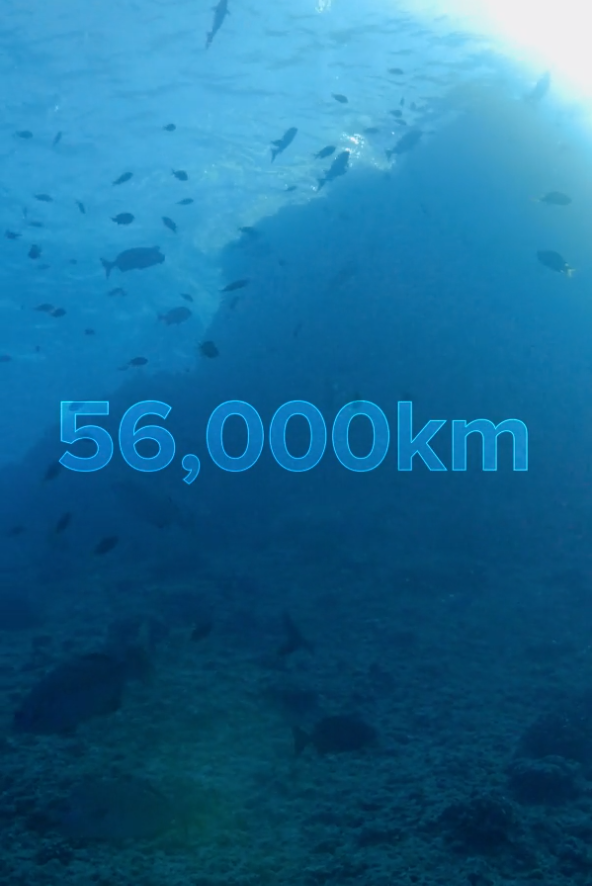 35 Phenomenal Facts About The Earth S Oceans Ocean Ocean And Earth Largest Ocean