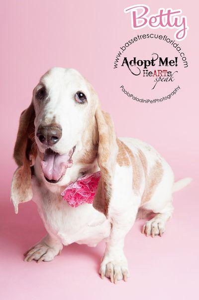 Paola Paladini Pet Photography Miami Pet Photography Broward Pet Photography Palm Beach Pet Photography Pets Animal Rescue Fundraising Events