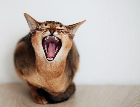 Choosing Your Cat's Food Should Be Convenient Cat noises