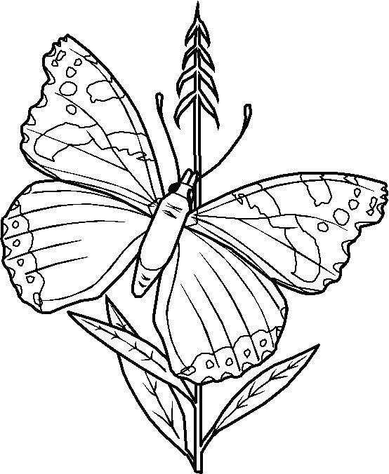 Tegninger til Farvelægning Dyr 116 | Tegninger - Farvelægning ...