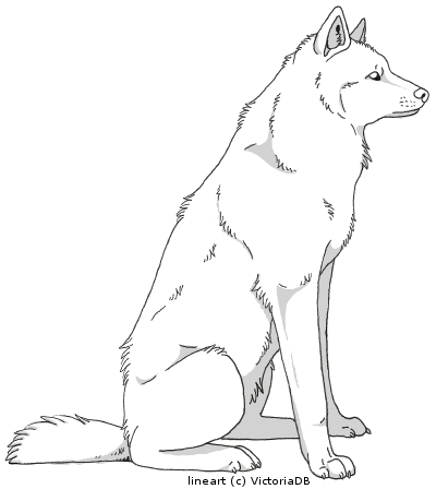 Wolf side view drawing - photo#36