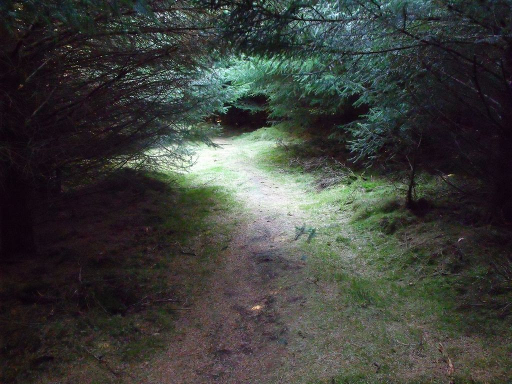 The very difficult to find path into Louden Wood Stone Circle (advice: use Google Earth). Aberdeenshire.