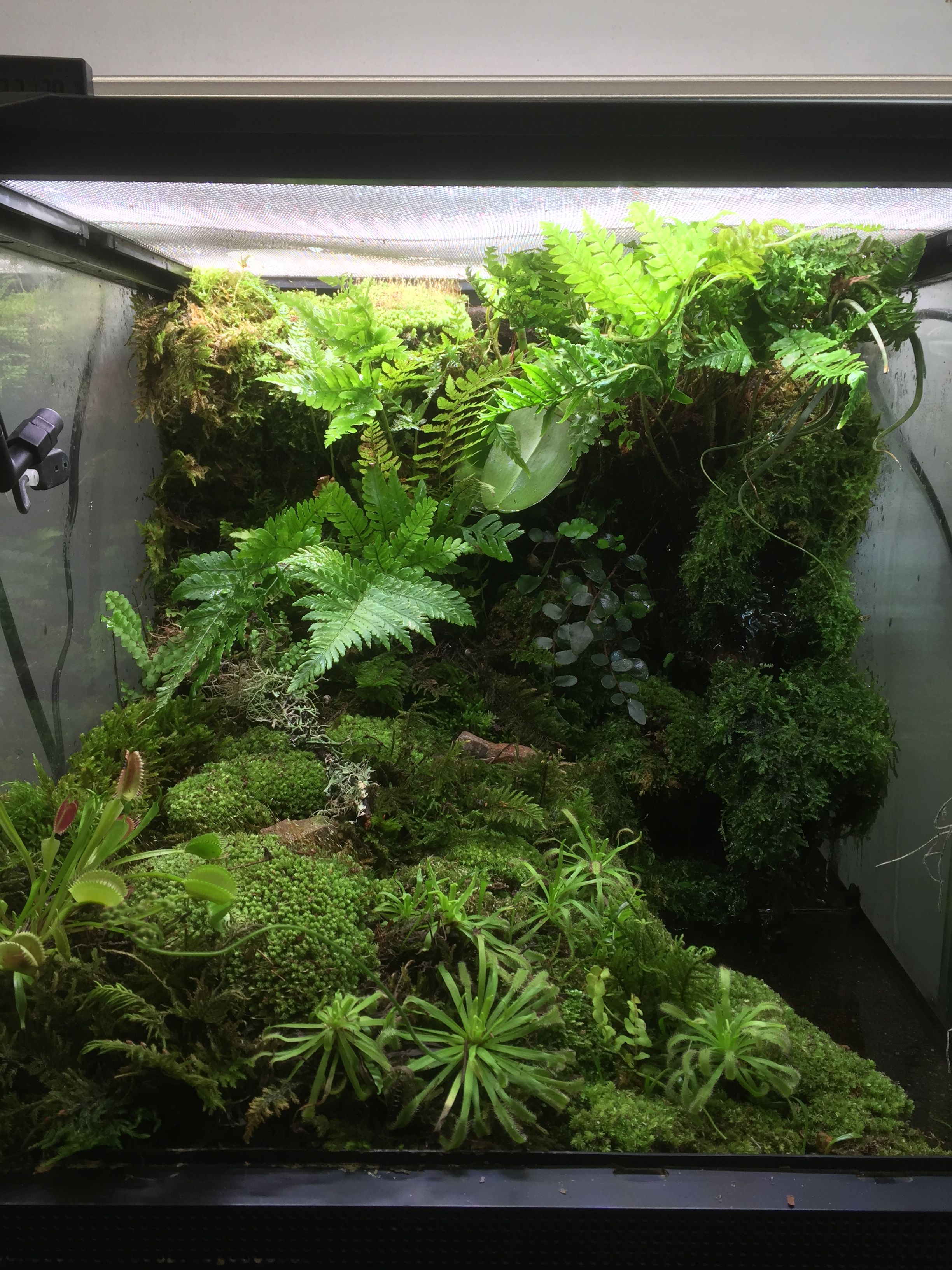 Terrarium Dart Frog Vivarium Things I Ve Made Frog Terrarium