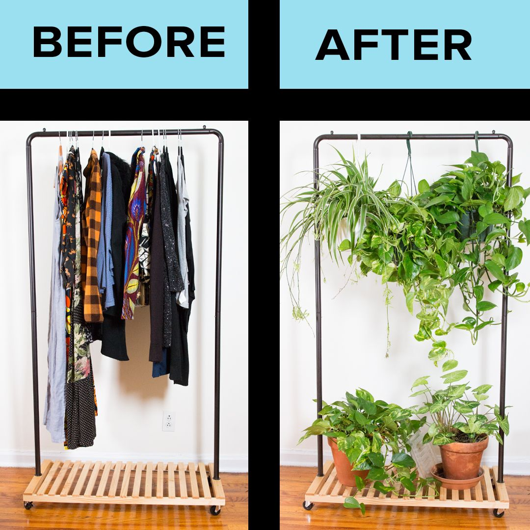 How To Organize Plants In A Small Apartment