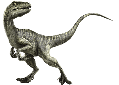velociraptor in real life was a genus of dromaeosaurid theropod dinosaur from the late