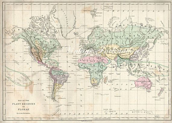 1873 Antique WORLD Map of the World 1800s atlas plant flora regions - best of world map fabric etsy
