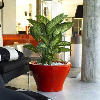 Decoracion Con Plantas Un Elemento Valiosisimo En El Feng Shui De