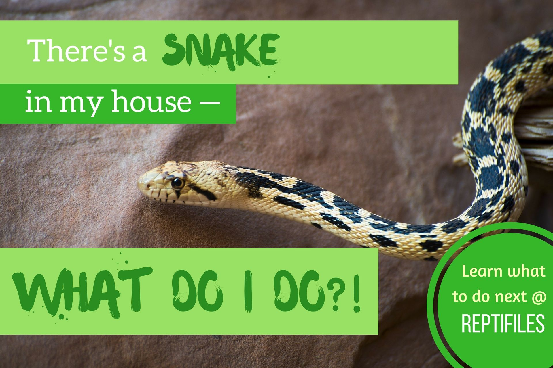 What to do when you find a snake in your house or backyard ...