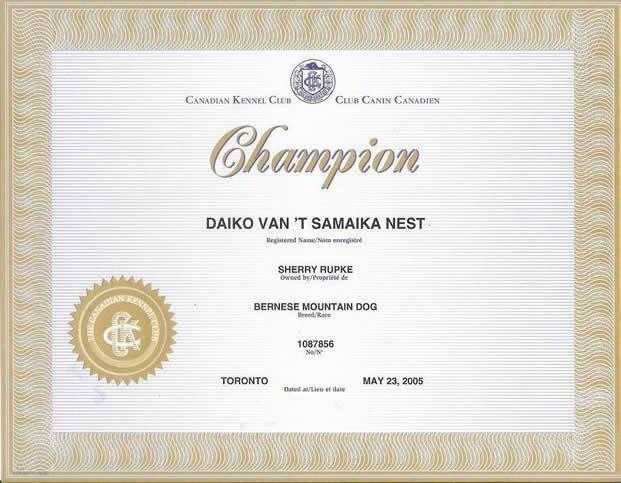 Daiko championship certificate bernese mountain dog champion daiko championship certificate bernese mountain dog champion yadclub Choice Image