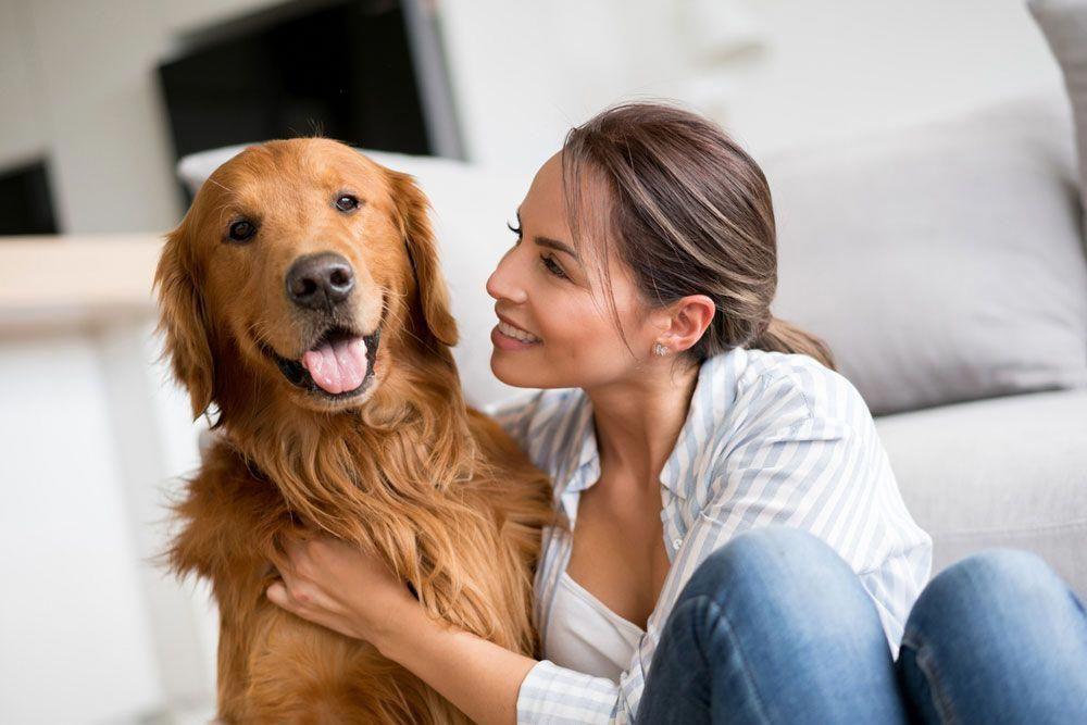 Thinkpup Shop In 2020 Golden Retriever Dogs Golden Retriever Golden Retriever Colors