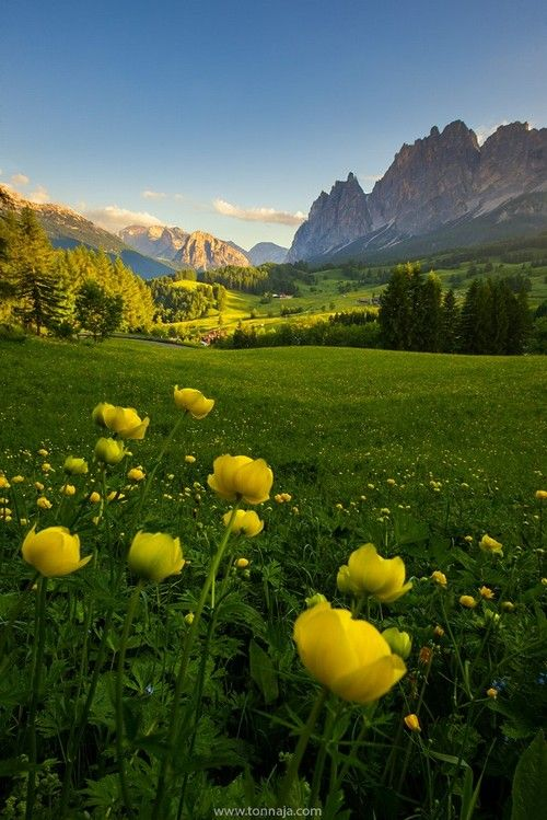 Dolomite With Wildflowers In Summer By Tonnaja Anan Charoenkal Alpine Italy