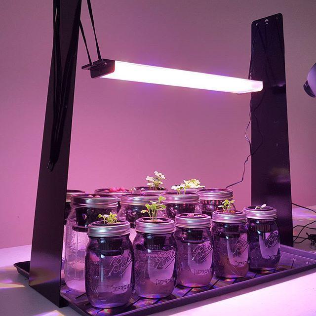 Happy Leaf arrives on Instagram.  Stay  tuned :) #happyleaf #ledgrowlights #hydroponics #indoorgarden #growlight #ledlights