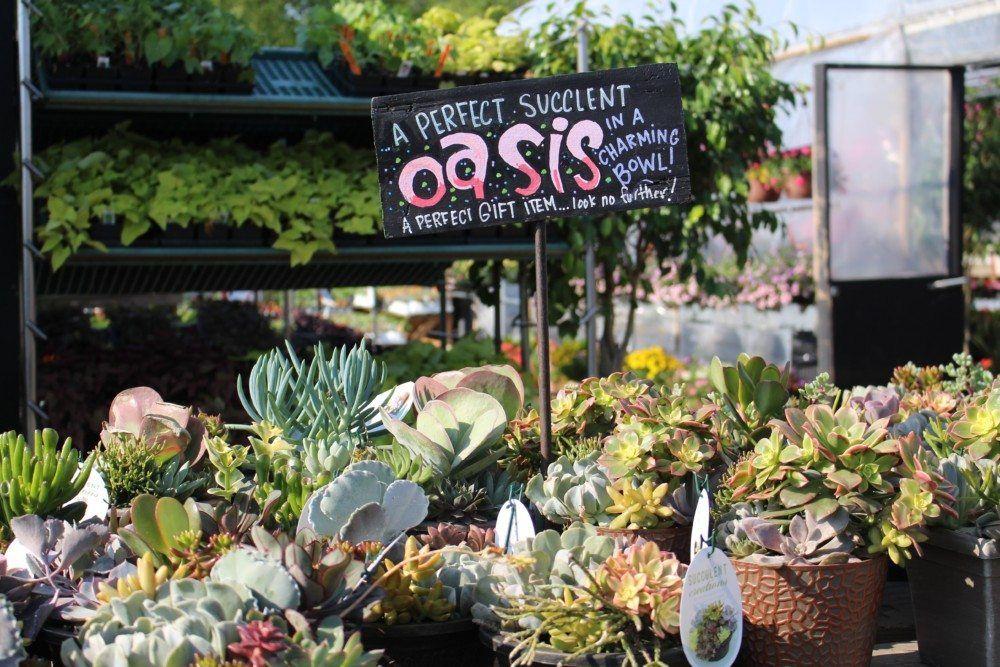 Signage Lawn Garden Retailer Lawn Garden Garden Lawn