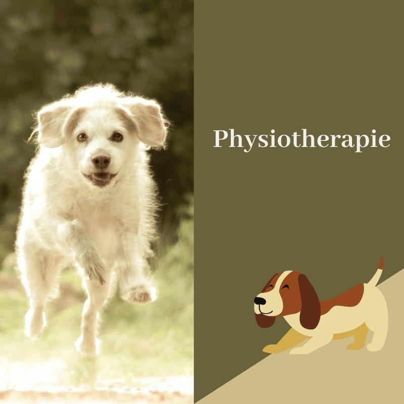 Pin Von Tiere In Balance Tellington Auf Physiotherapie Hunde Hundeerziehung Hunde Hundesalon
