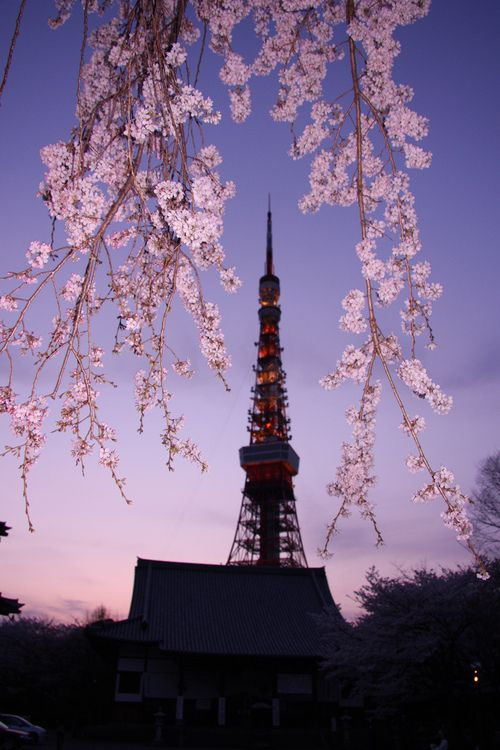 Japan Cherry Blossom 2021 Forecast When Where To See Sakura In Japan Live Japan Travel Guide Cherry Blossom Japan Cherry Blossom Festival Japan Travel