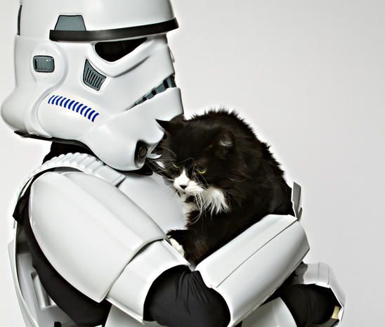 May the furs be with you Animal shelter, Star wars