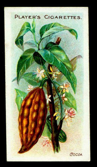 Cigarette Card - Cocoa by cigcardpix, via Flickr